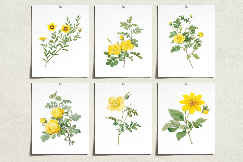 Vintage Yellow Flower Prints (6) | Modern Wall Art | Wall Art Decor Prints | Room Wall Decor | YP-1001