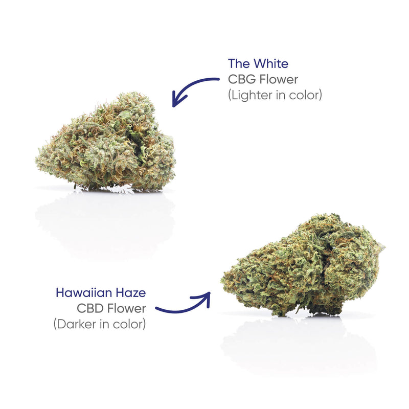 HH Flower Jar - CBG+Hawaiian Haze