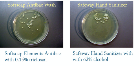Two Ager Plates showing probiotic growth after being in antibacterial hand wash and hand sanitizer