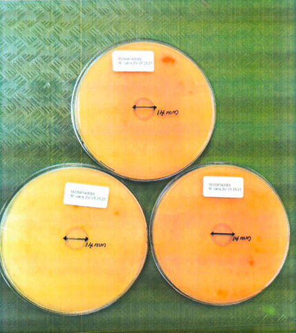 Three Inhibition Zone Ager Plates of Microsporum canis Bodin