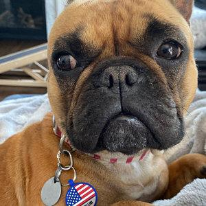 Soundless US Flag Pet Tag freeshipping - Love Your Pets