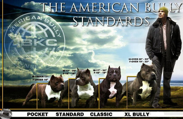THE AMERICAN BULLY STANDARDS