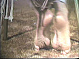 Harmony's 2nd Barefoot Movie
