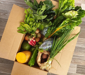 Earthbox (small)