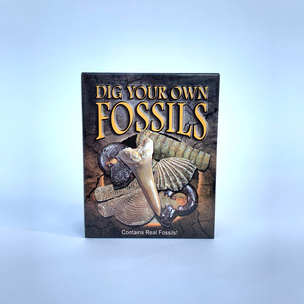 Dig Your Own Fossils .jpg