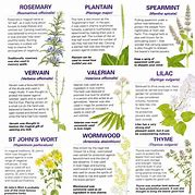 Herbs and their Magical Properties