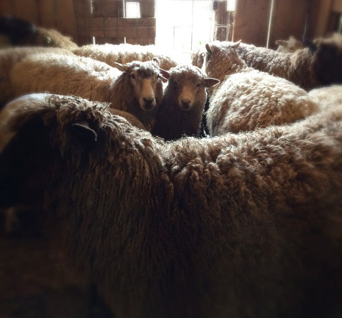 local pastures wool
