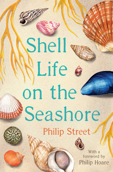 Shell Life on the Seashore by Philip Street