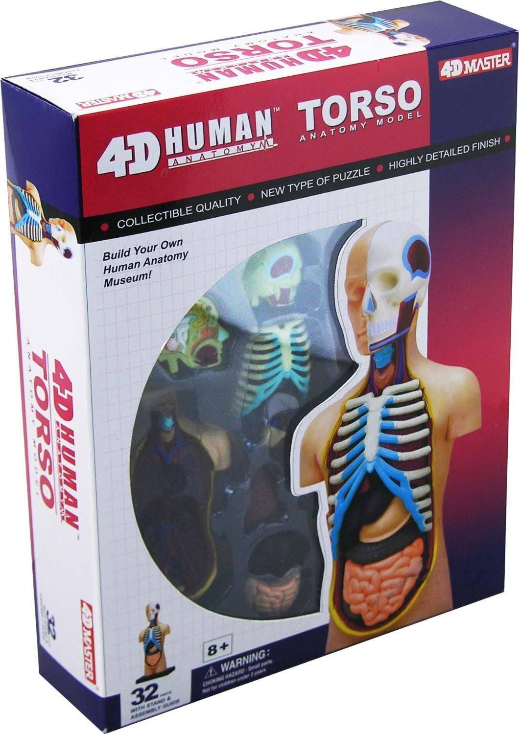 4d Vision Anatomy Puzzle Human Torso Righttolearn