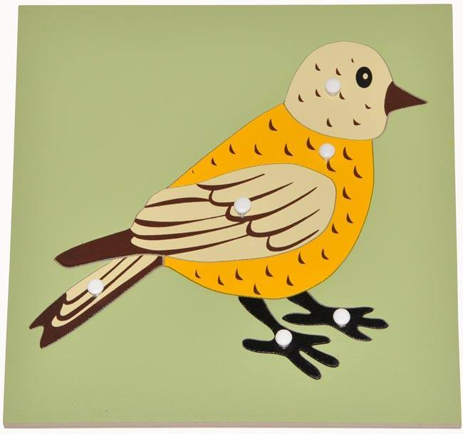 parts of a bird puzzle righttolearn com sg