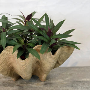 Aged Conch Shell Planter