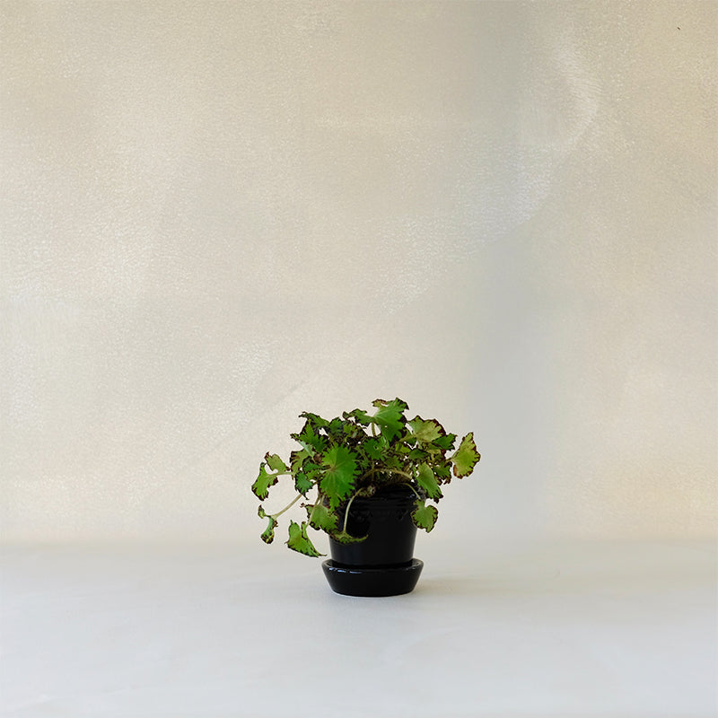 Copenhagen Planter Black