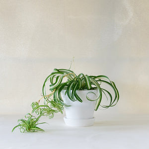 Copenhagen Planter White
