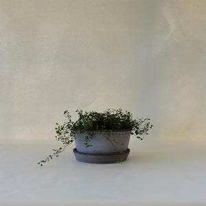 Helena Herb Planter Grey