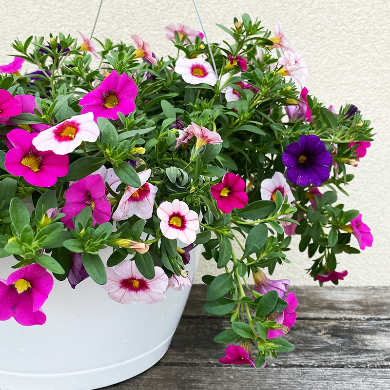 "Berry Darling 10"" Hanging Basket"