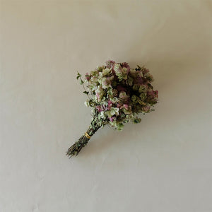 Kent Beauty Oregano Bunch