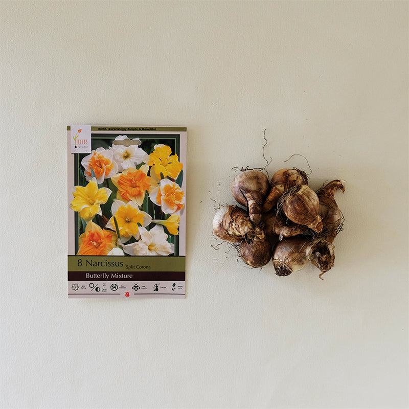 Narcissus 'Butterfly Mixture' Bulb PK/8
