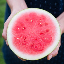 Load image into Gallery viewer, Organic mini seedless watermelons (Guest Producer: Bowen)