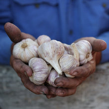 Load image into Gallery viewer, Locally Grown Garlic 250g