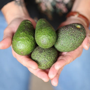 Hass Avocados Mini (pack of 5)