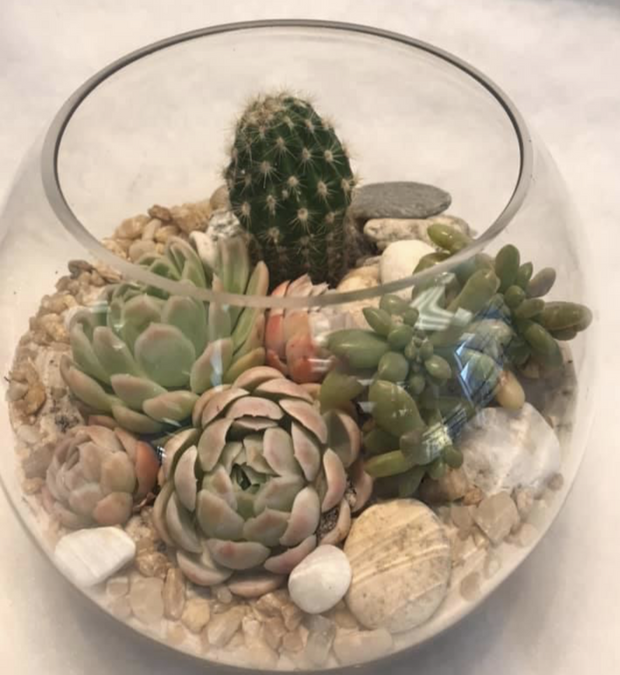 Bloom Sphere of seasonal cacti and stunning succulents