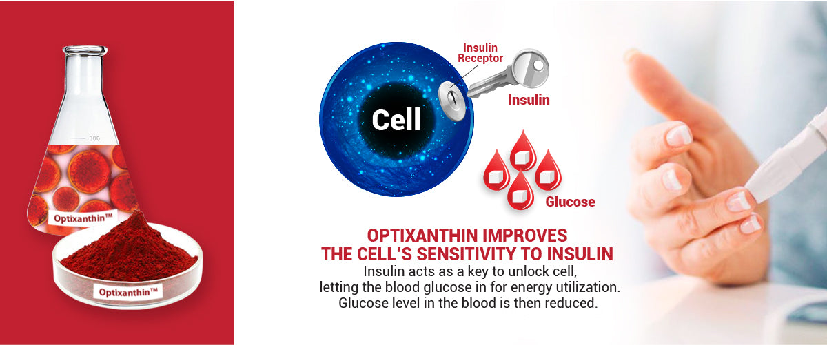 Optixanthin Astaxanthin improves the cell's sensitivity to insulin