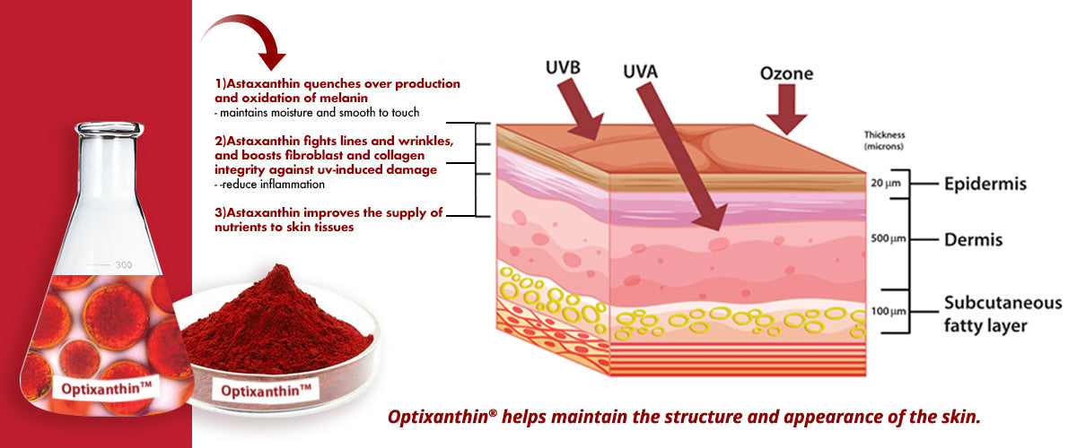 Optixanthin helps maintain the structure and appearance of the skin