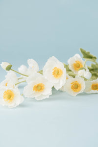 Silk White Yellow Poppy