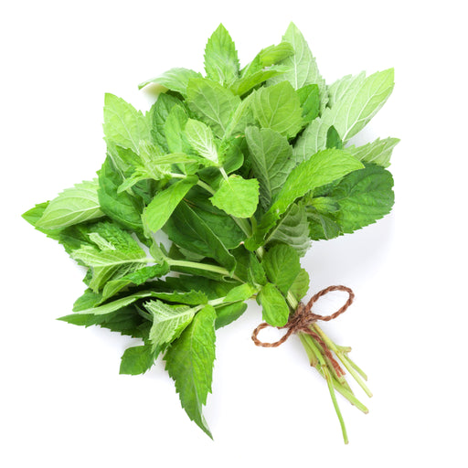 Mint leaves bunch