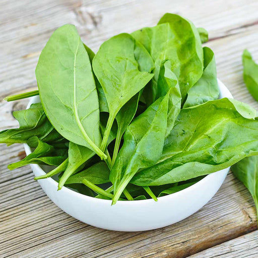 Spinach leaves bunch