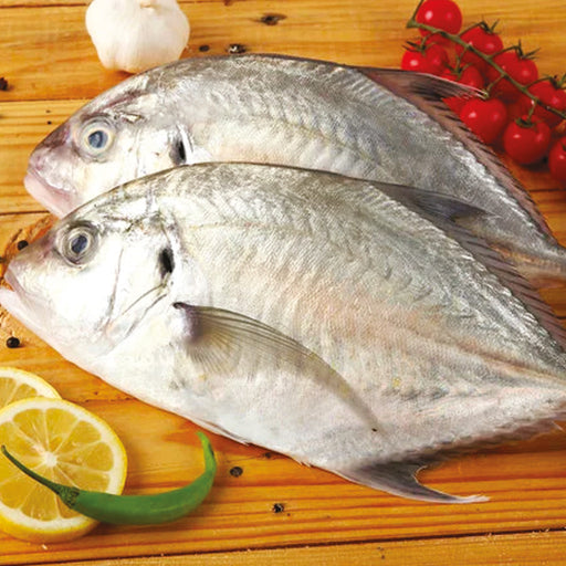 Malabar Trevally 1kg approx