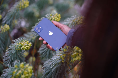 Blue Apple iPhone 12 being held against a backdrop of bushes