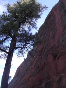 Looking Up Red Rock