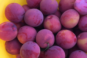 Pluot, 16 oz
