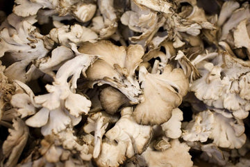 Organic Maitake Mushrooms, 16oz from Far West Fungi - San Francisco Farmers Market Delivery