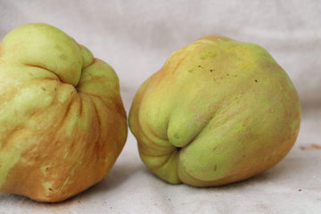 Organic Quince, 1 unit from G. L. Alferi Farms - San Francisco Farmers Market Delivery