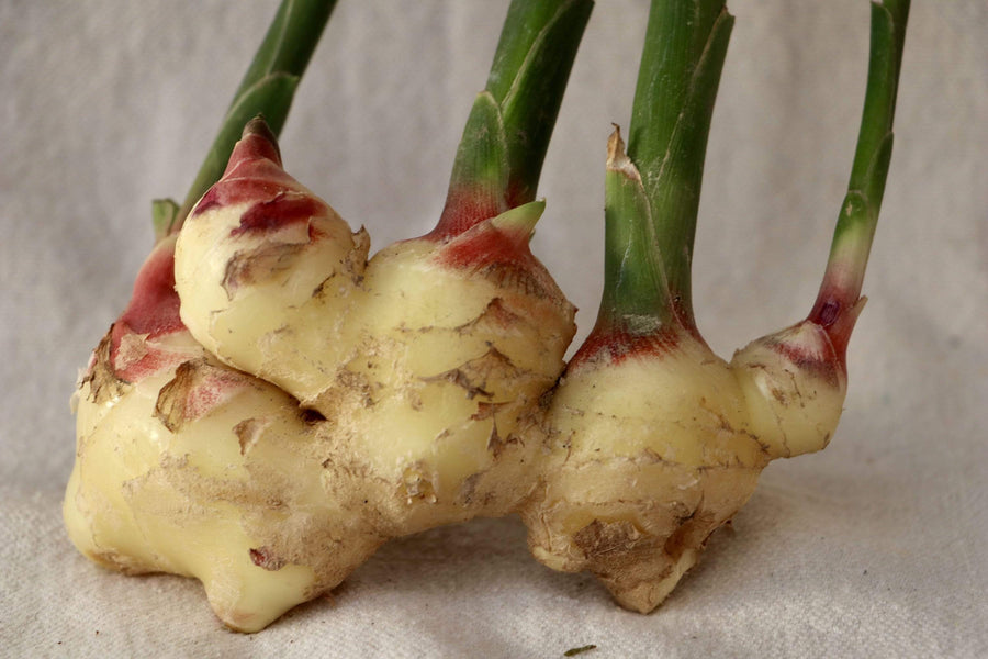 Organic Fresh Ginger, 1 root cluster from GG Farm - San Francisco Farmers Market Delivery