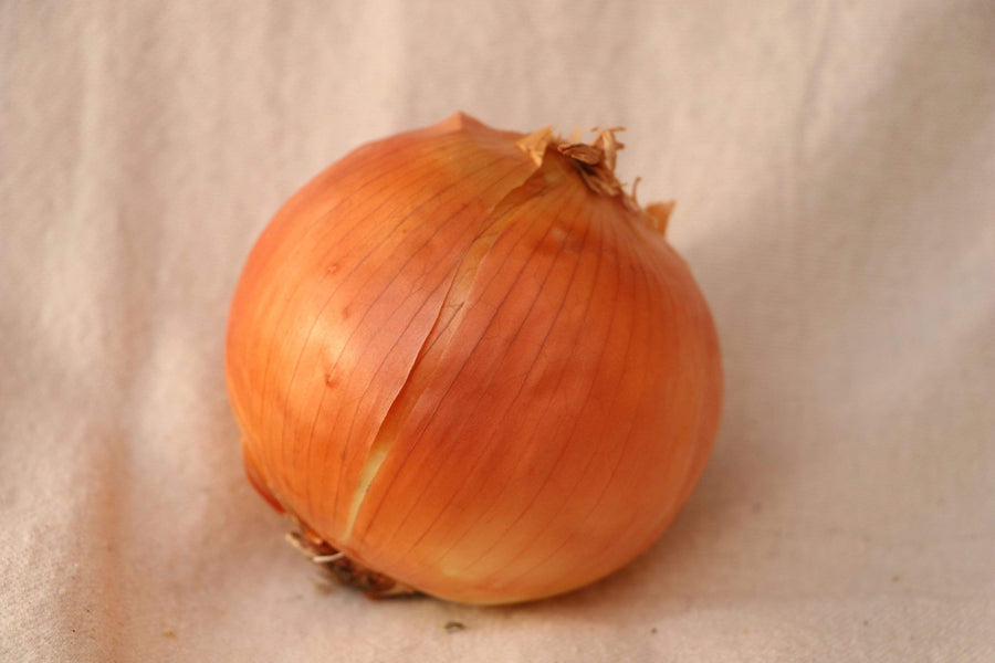Organic Yellow Onion, 1 unit from GG Farm - San Francisco Farmers Market Delivery