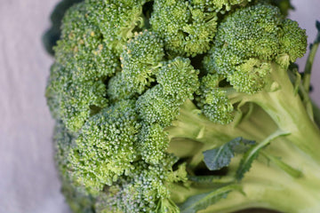 Organic Broccoli, 1 bunch from Green Thumb Organics - San Francisco Farmers Market Delivery