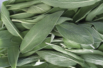 Organic Sage, 1 bunch from Green Thumb Organics - San Francisco Farmers Market Delivery