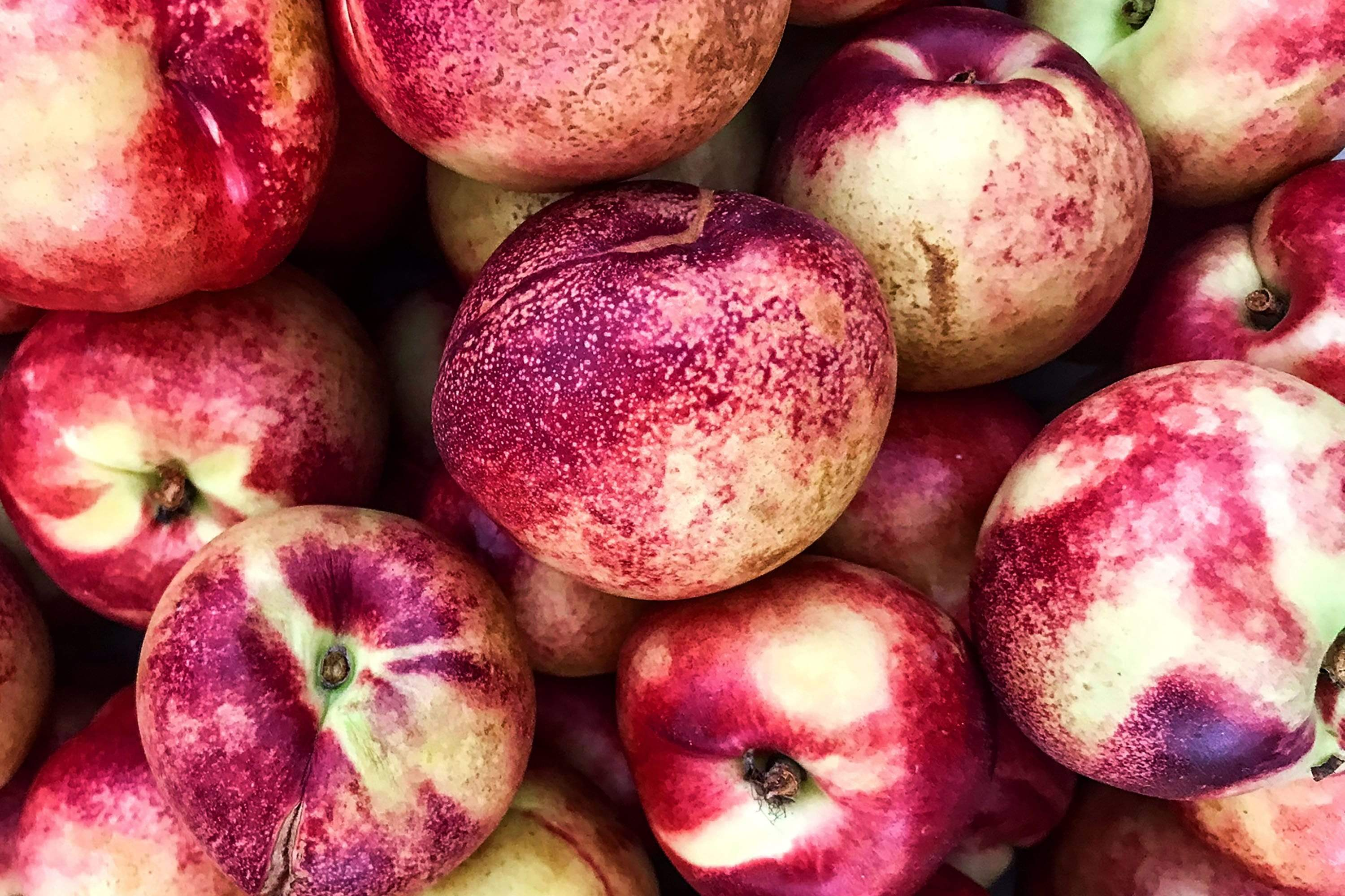 Organic Nectarines, 16 oz from Kashiwase Farms - San Francisco Farmers Market Delivery