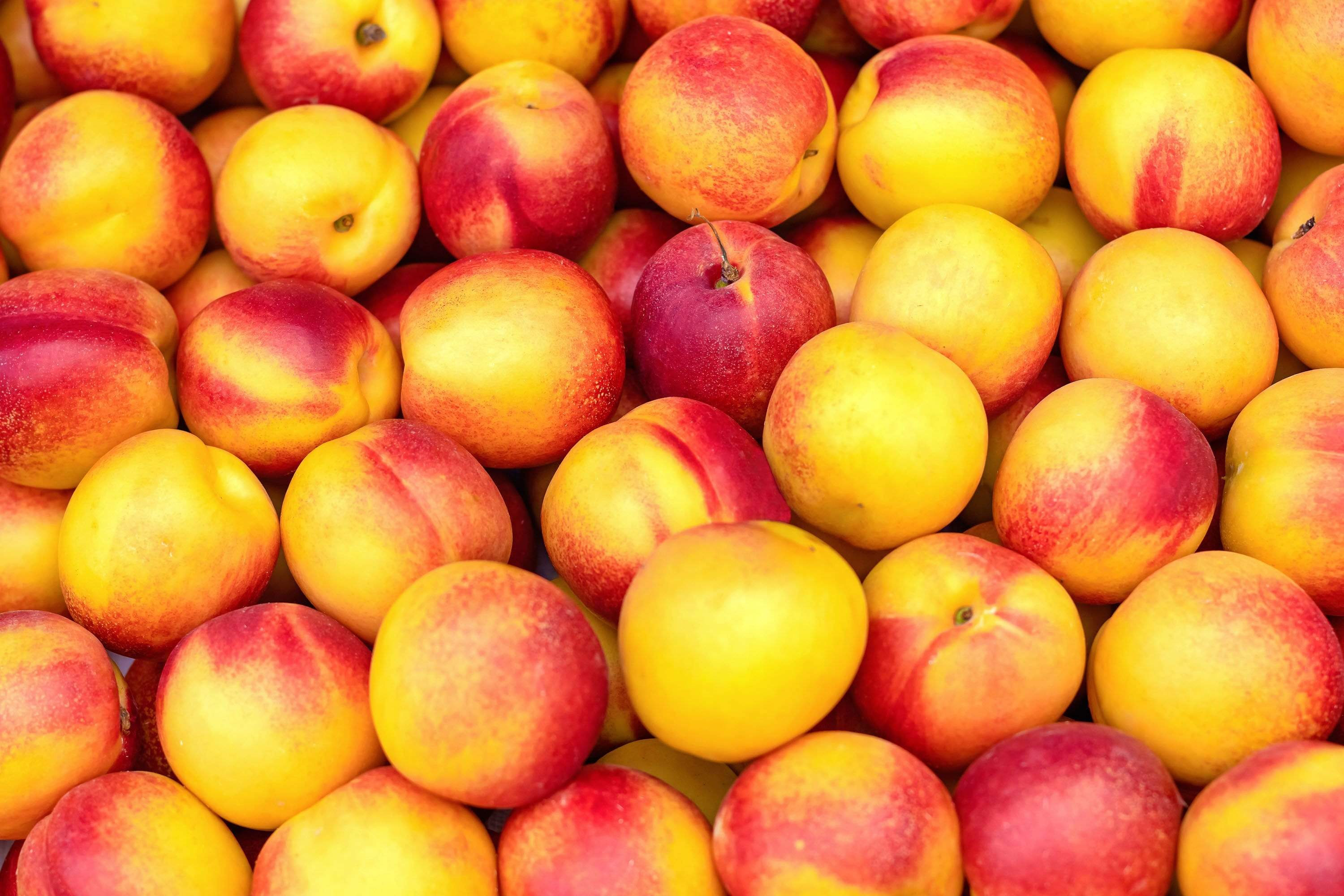 Organic Yellow Nectarines, 16 oz from Kashiwase Farms - San Francisco Farmers Market Delivery
