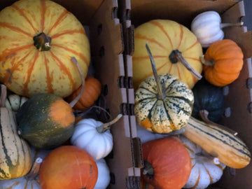 Organic Decorative Mini Pumpkins, 10 units from McGinnis Ranch - San Francisco Farmers Market Delivery