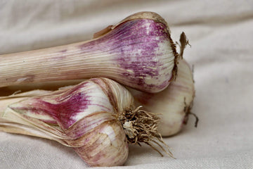 Organic Garlic, 1 bunch from Oya Organics - San Francisco Farmers Market Delivery