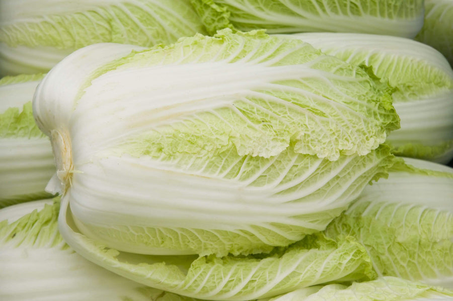 Organic Napa Cabbage, 1 head from Oya Organics - San Francisco Farmers Market Delivery