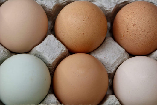 Organic A Dozen Eggs from Rolling Oaks Ranch - San Francisco Farmers Market Delivery