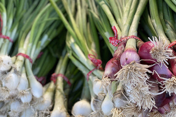 Organic Spring Onions, 1 bunch from Star Route Farms - San Francisco Farmers Market Delivery