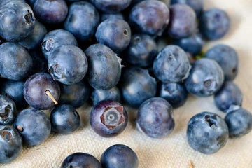 Organic Blueberries, 24 oz from Triple Delight Blueberries - San Francisco Farmers Market Delivery