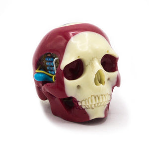 HAND CARVED BIONIC POOL BALL SKULL - WINE #15