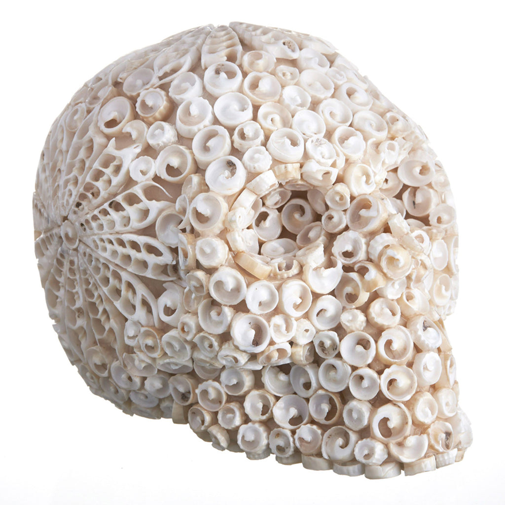 CURLY  MOSAIC SHELL SKULL - LARGE - 'FLORAL PATTERN'
